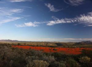 Die dieporanje prag van die Namakwa Nasionale Park