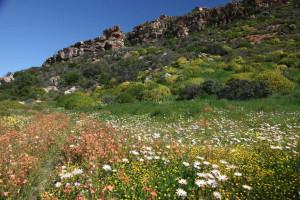 Kleurryke blomme in die Biedouwvallei